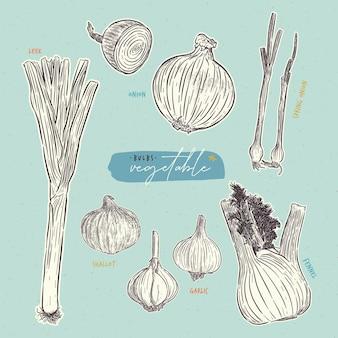 Collection de légumes bulbes. vecteur de croquis de tirage à la main.
