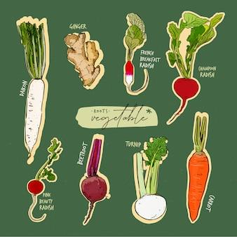 Collection de légumes racines, croquis de dessin à la main.