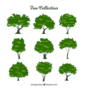 Collection de neuf arbres feuillus