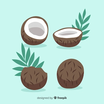 Collection de noix de coco dessinée à la main