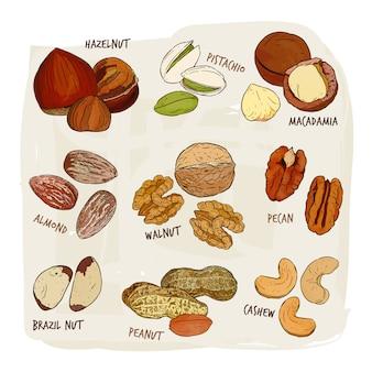 Collection de noix