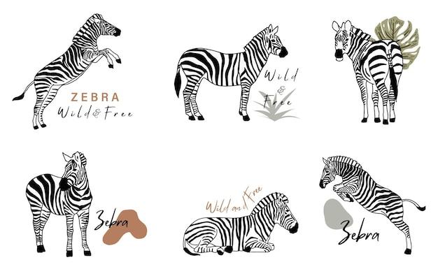 Collection d'objets animaux avec zèbre. illustration vectorielle pour icône, autocollant, imprimable