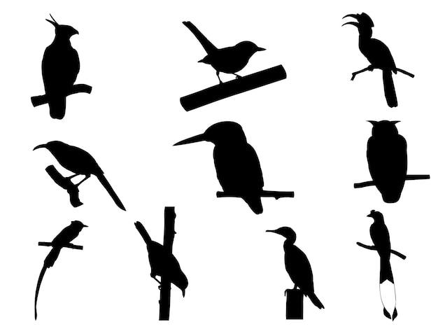 Collection d'oiseau sur une branche d'arbre silhouettes.