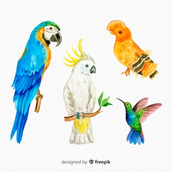 Collection d'oiseau exotique aquarelle