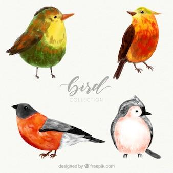 Collection d'oiseaux aquarelle