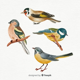 Collection d'oiseaux à l'aquarelle