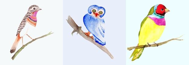 Collection d'oiseaux aquarelles