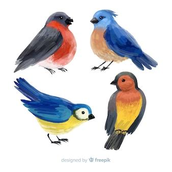 Collection d'oiseaux d'automne aquarelles