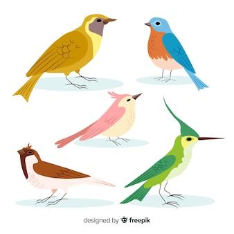 Collection d'oiseaux colorés dessinés à la main