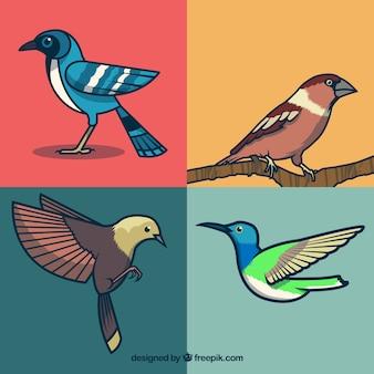 Collection d'oiseaux dessiné à la main
