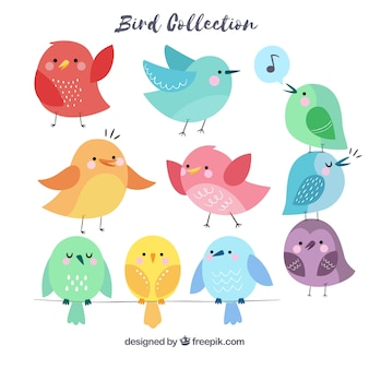 Collection d'oiseaux dessinés à la main