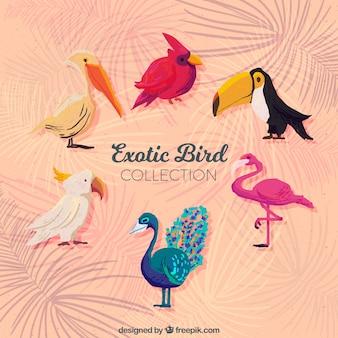 Collection d'oiseaux exotiques aquarelle