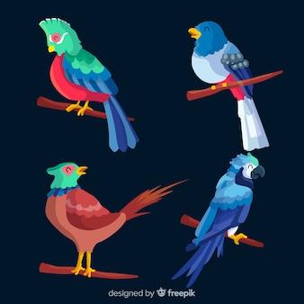 Collection d'oiseaux exotiques design plat