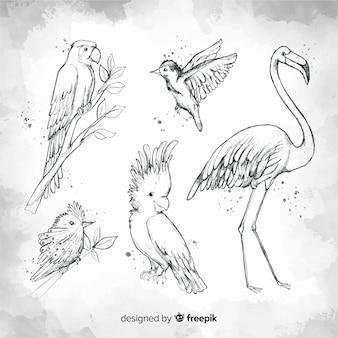 Collection d'oiseaux exotiques dessinés à la main