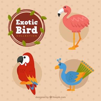 Collection d'oiseaux exotiques plats