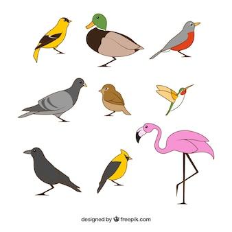 Collection d'oiseaux plats