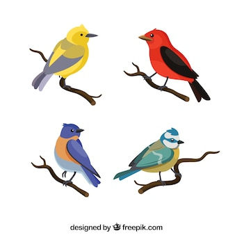 Collection d'oiseaux plats