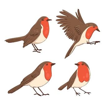 Collection d'oiseaux robin dessinés à la main