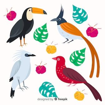 Collection d'oiseaux sauvages tropicaux exotiques