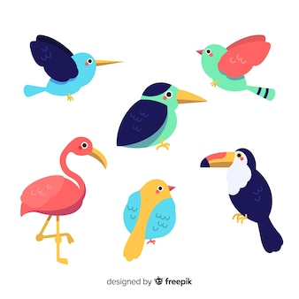 Collection d'oiseaux tropicaux dessinés à la main
