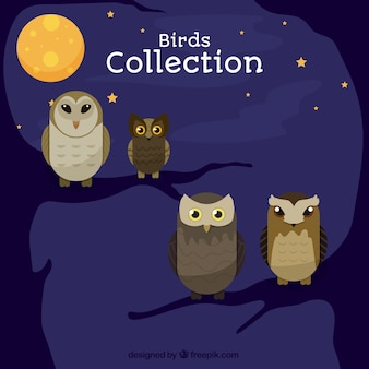 Collection owls