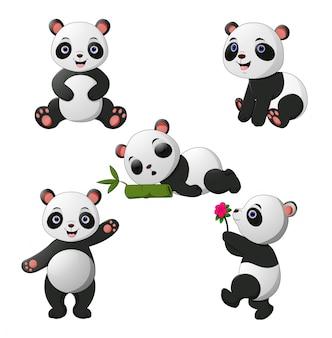 Collection de pandas bébé mignon