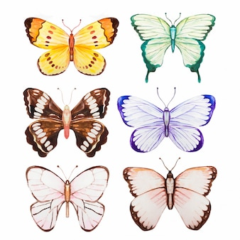 Collection de papillons aquarelle