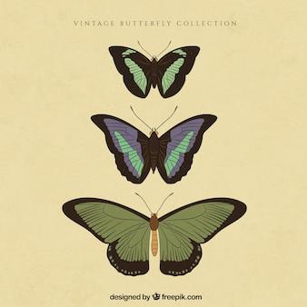 Collection de papillons vintage