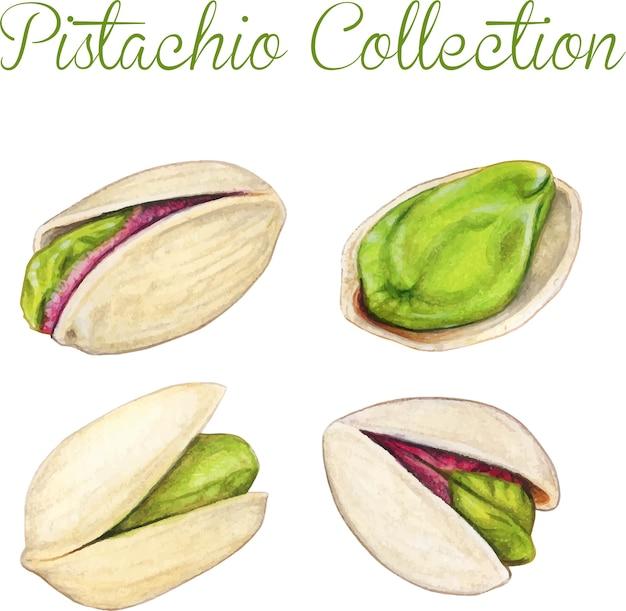 Collection de pistaches aquarelle de haute qualité