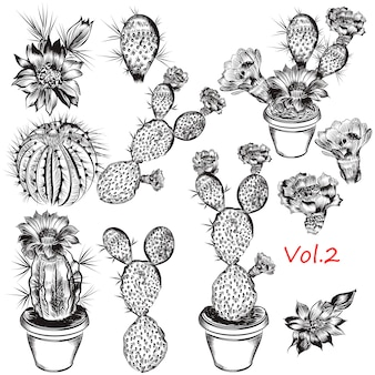 Collection de plantes et de cactus dessinés à la main