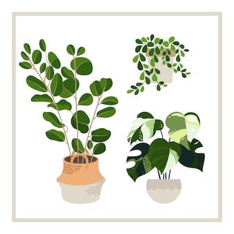 Collection de plantes décoratives pour la maison