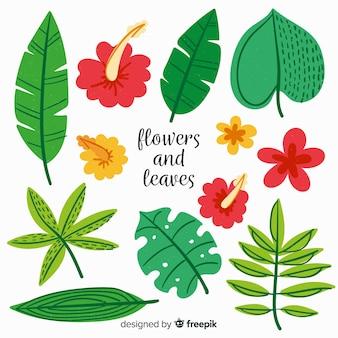 Collection de plantes dessinées à la main