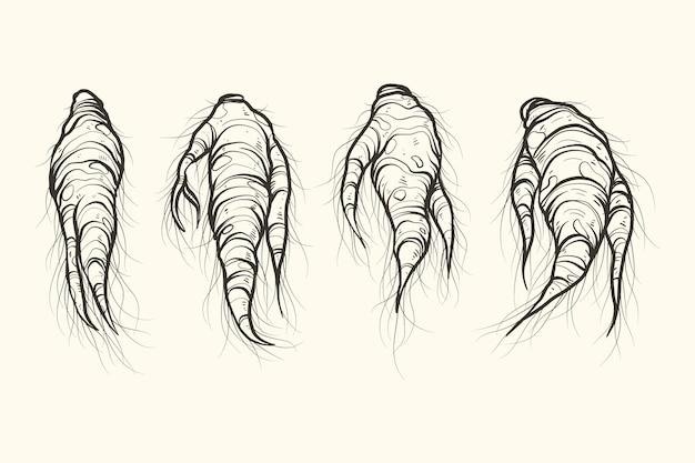Collection de plantes de ginseng dessinés à la main réaliste
