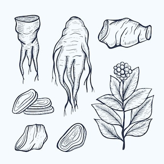 Collection de plantes de ginseng dessinés à la main réaliste