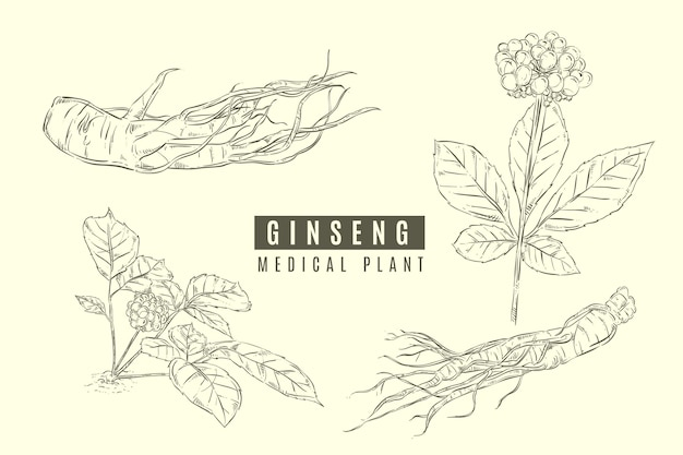 Collection de plantes de ginseng