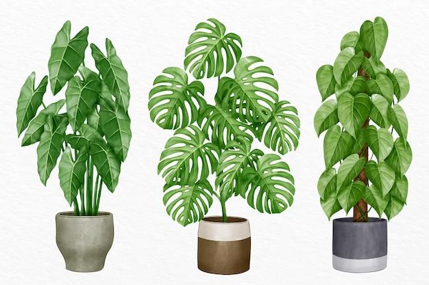 Collection de plantes d'intérieur aquarelle peintes à la main