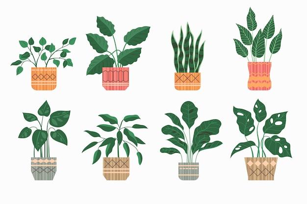 Collection de plantes d'intérieur plat bio