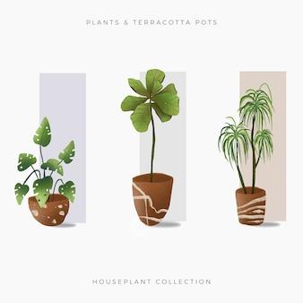 Collection de plantes maison