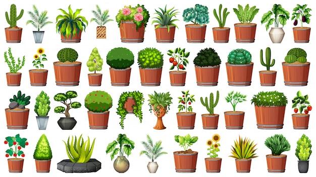 Collection de plantes en pot sur blanc