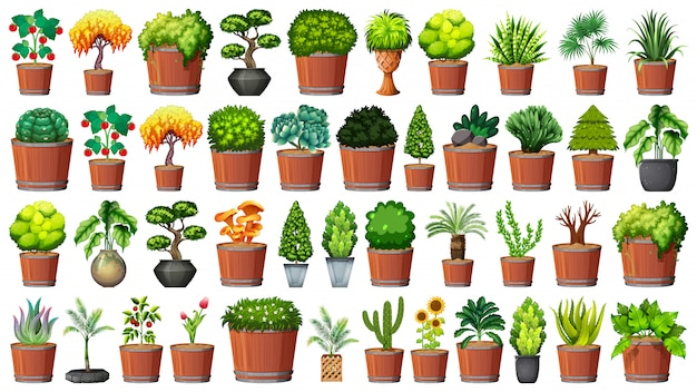 Collection de plantes en pot sur blanc
