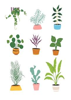 Collection de plantes