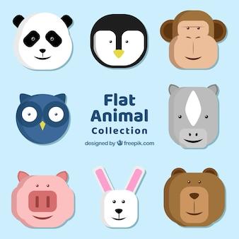 Collection plate de visages d'animaux amusants