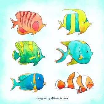 Collection de poissons colorés dans un style aquarelle