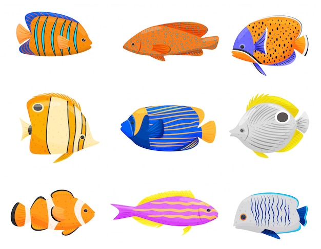 Collection de poissons colorés sur fond blanc.