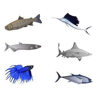 Collection de poissons colorés