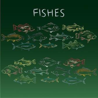 Collection de poissons dessinés à la main