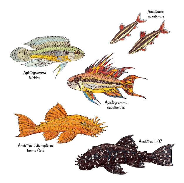 Collection de poissons de fond d'aquarium coloré dans le style de dessin sur blanc
