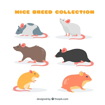 Collection de races de souris