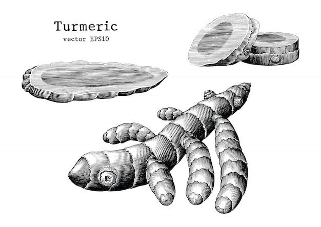 Collection de racine de curcuma dessiner à la main vintage isolé sur fond blanc