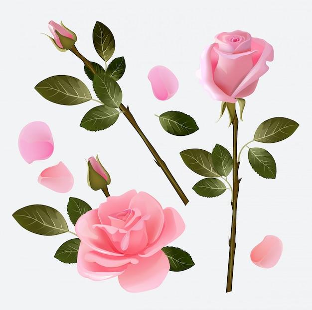 Collection rose. collection de photos d'amour de belle plante rose et bourgeon rose